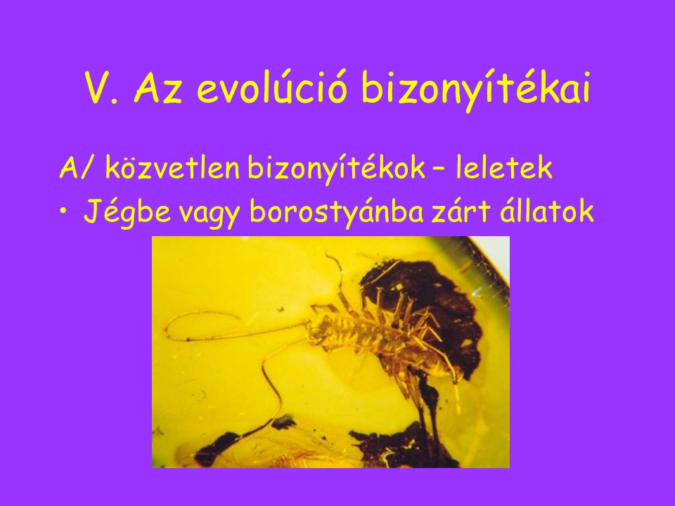 V. Az evolúció bizonyítékai