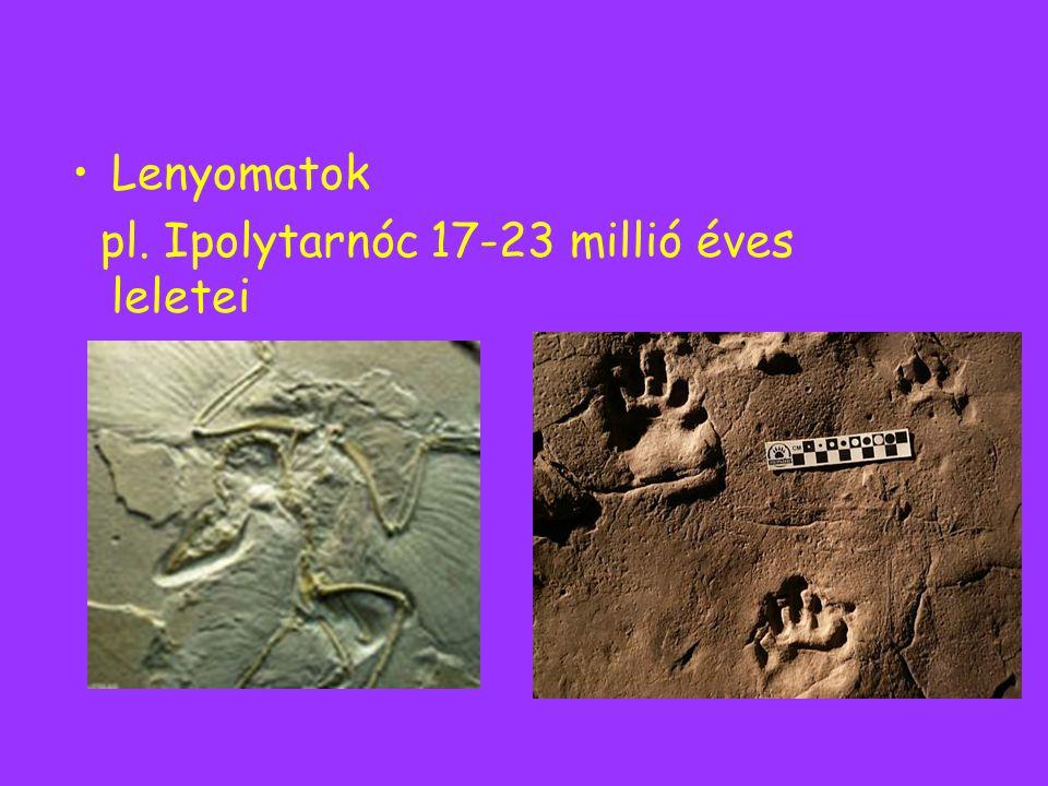 Lenyomatok pl. Ipolytarnóc 17-23 millió éves leletei