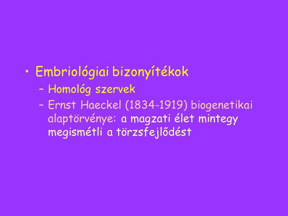 Embriológiai bizonyítékok