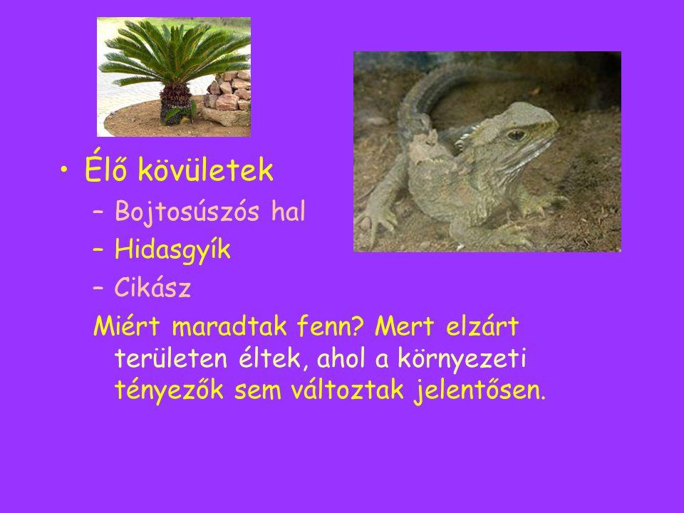 Élő kövületek Bojtosúszós hal Hidasgyík Cikász