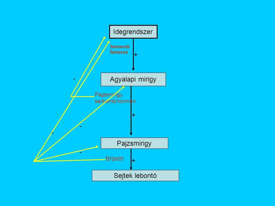 Idegrendszer + - Agyalapi mirigy + - - Pajzsmirigy - tiroxin +