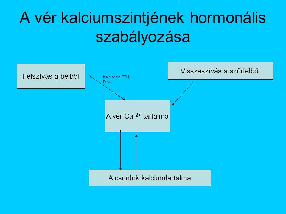 A vér kalciumszintjének hormonális szabályozása