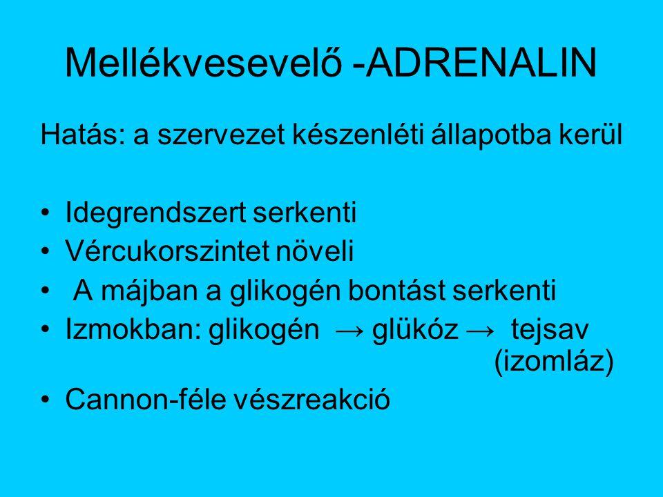 Mellékvesevelő -ADRENALIN