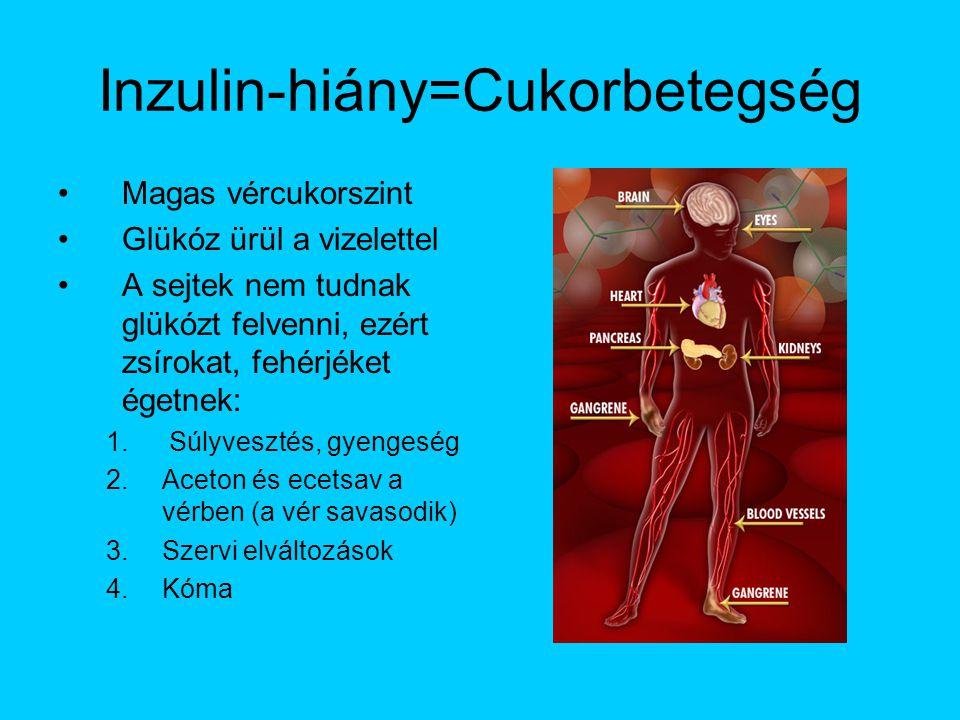 Inzulin-hiány=Cukorbetegség