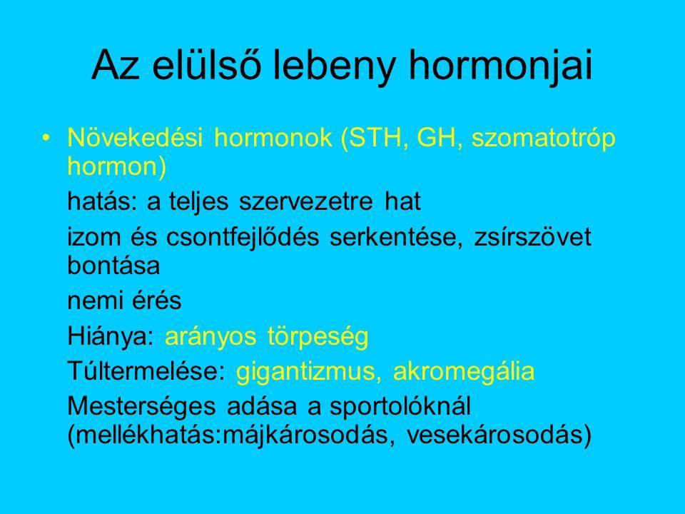 Az elülső lebeny hormonjai
