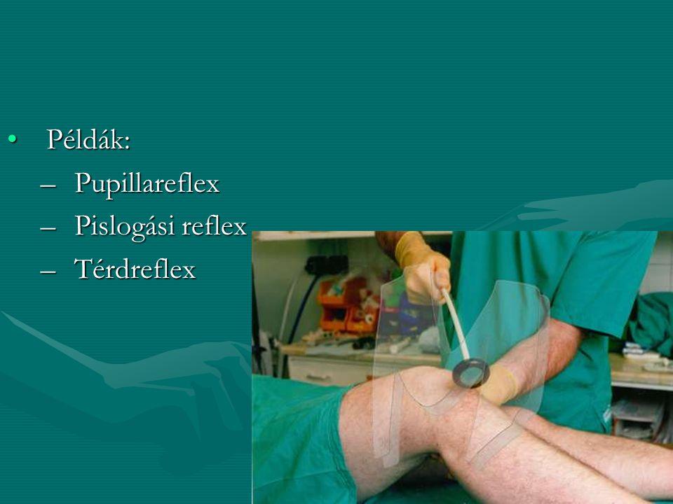 Példák: Pupillareflex Pislogási reflex Térdreflex