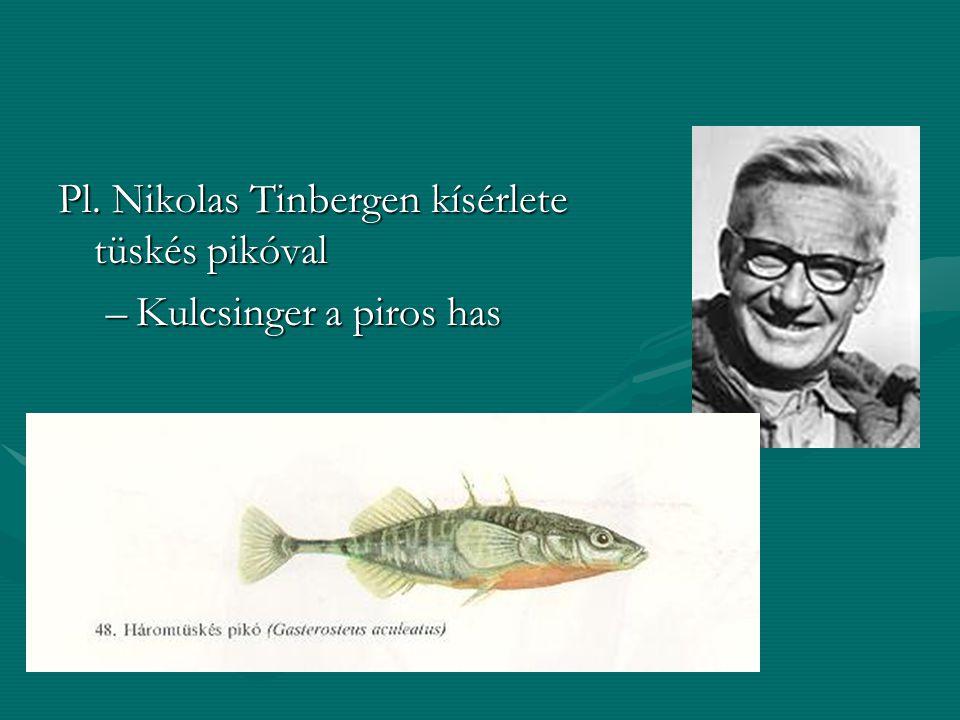 Pl. Nikolas Tinbergen kísérlete tüskés pikóval
