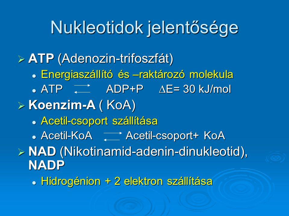 Nukleotidok jelentősége