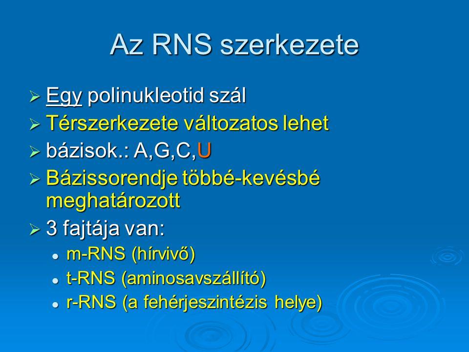 Az RNS szerkezete Egy polinukleotid szál