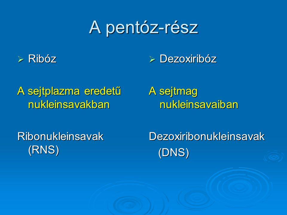 A pentóz-rész Ribóz A sejtplazma eredetű nukleinsavakban