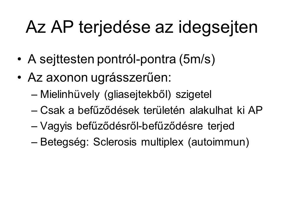 Az AP terjedése az idegsejten