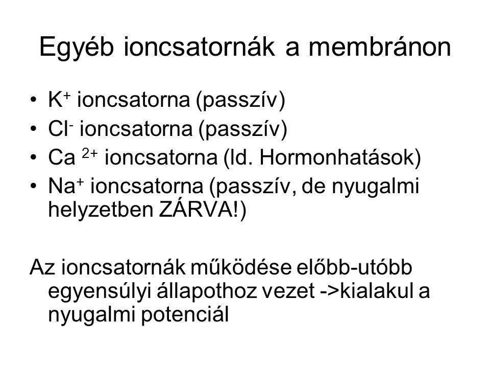Egyéb ioncsatornák a membránon