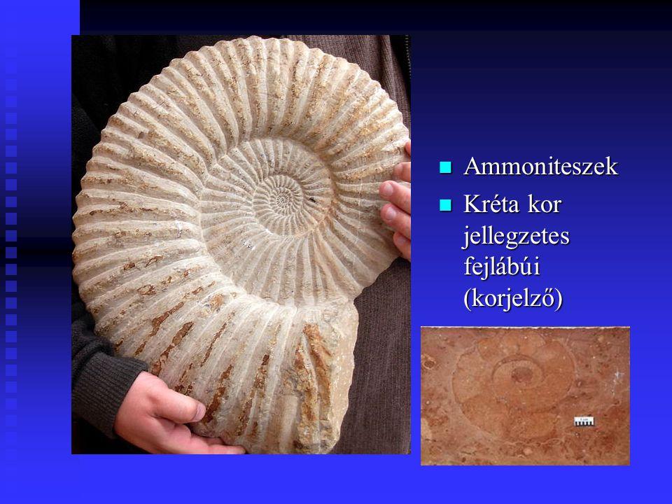Ammoniteszek Kréta kor jellegzetes fejlábúi (korjelző)
