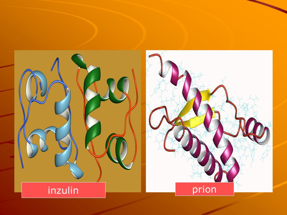 inzulin prion