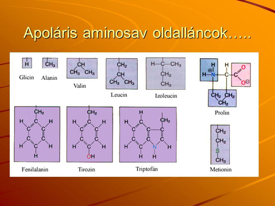 Apoláris aminosav oldalláncok…..