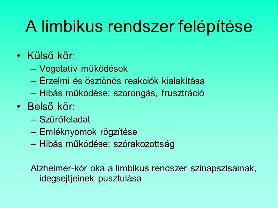 A limbikus rendszer felépítése