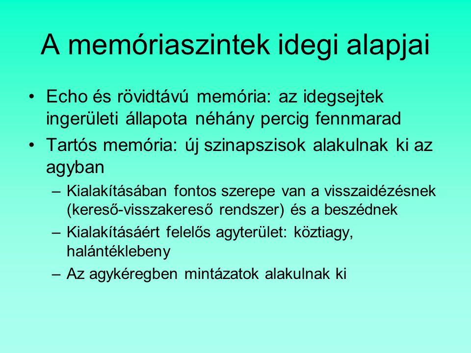 A memóriaszintek idegi alapjai