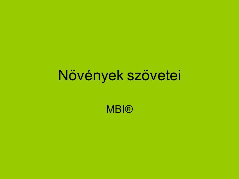 Növények szövetei MBI®