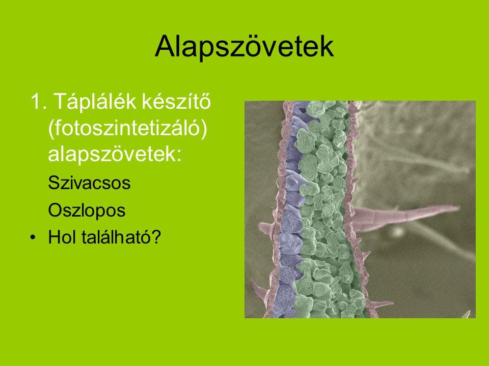 Alapszövetek 1. Táplálék készítő (fotoszintetizáló) alapszövetek: