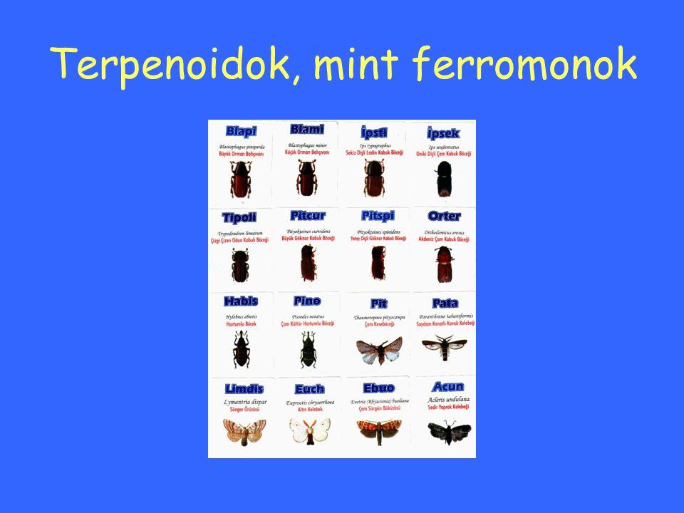 Terpenoidok, mint ferromonok