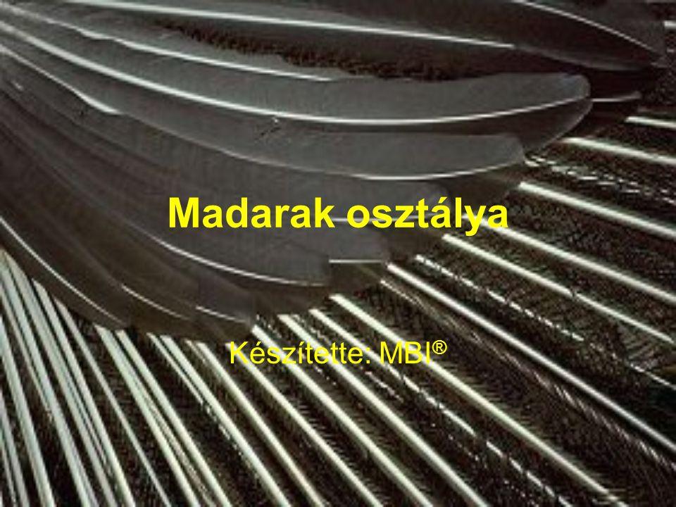 Madarak osztálya Készítette: MBI®