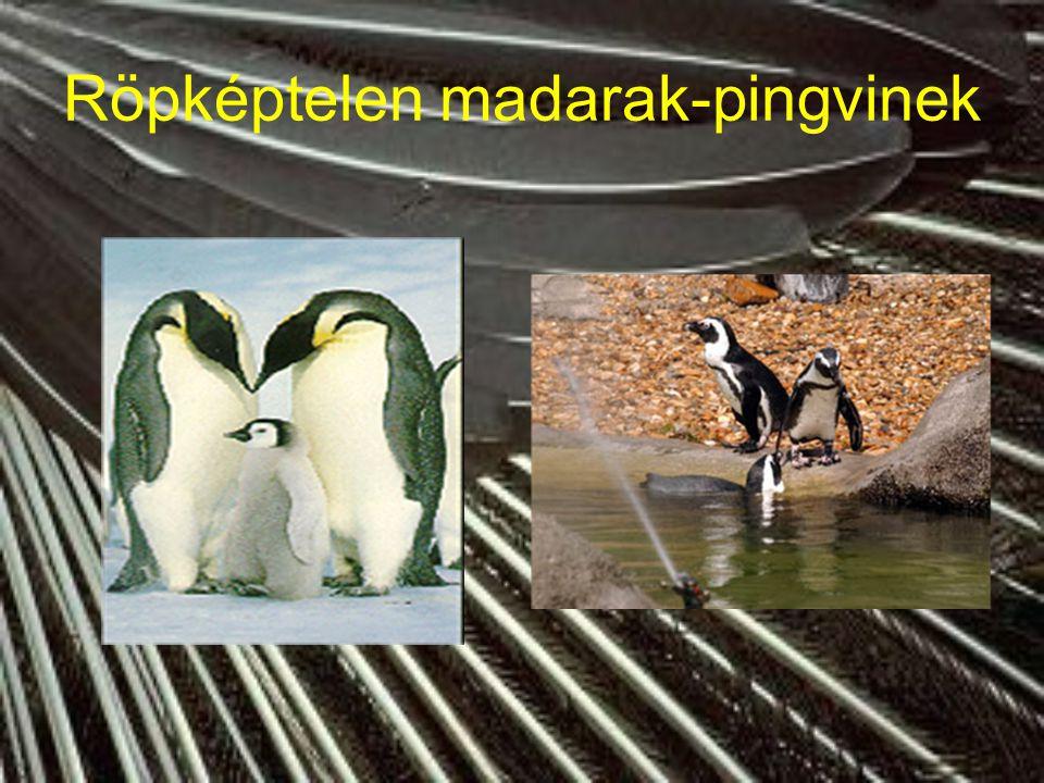 Röpképtelen madarak-pingvinek