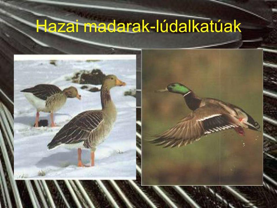 Hazai madarak-lúdalkatúak