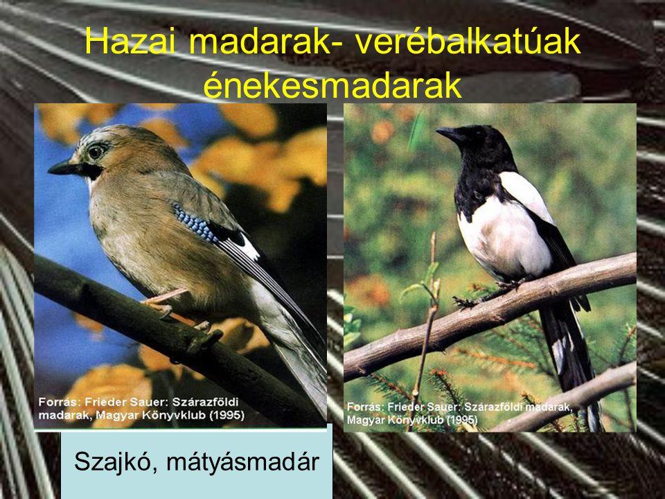 Hazai madarak- verébalkatúak énekesmadarak