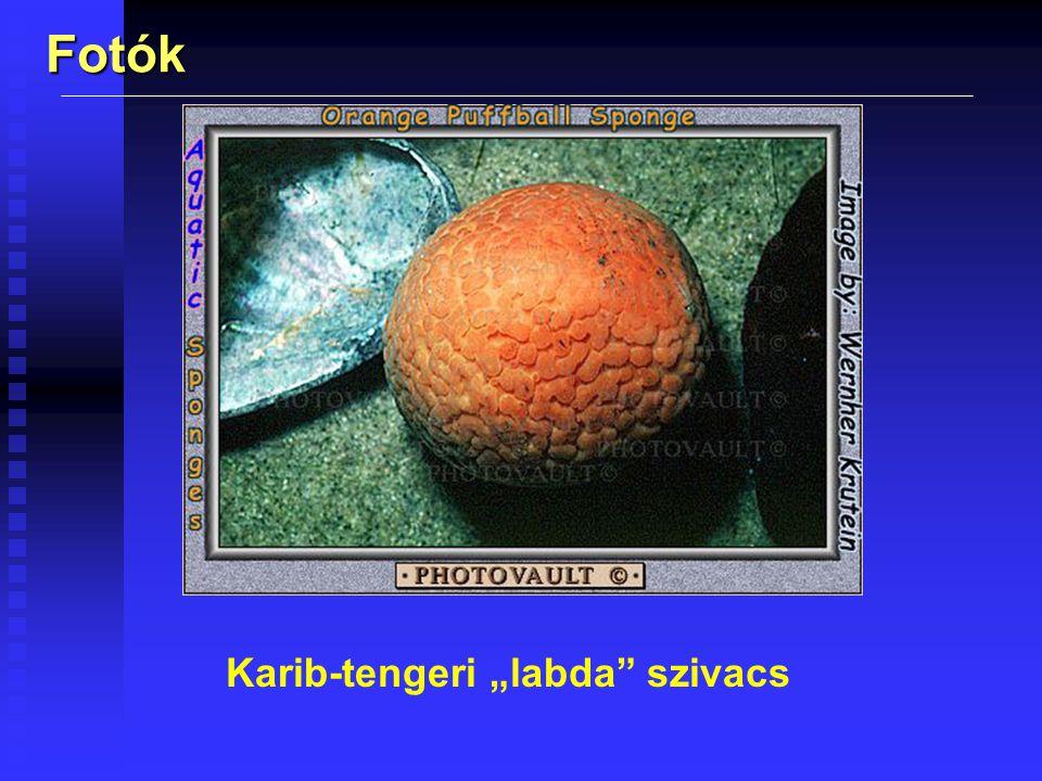 """Karib-tengeri """"labda szivacs"""