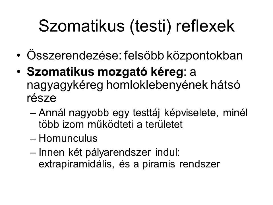 Szomatikus (testi) reflexek