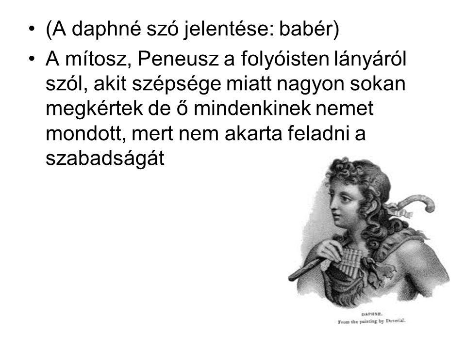 (A daphné szó jelentése: babér)