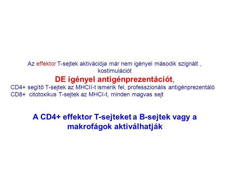 A CD4+ effektor T-sejteket a B-sejtek vagy a makrofágok aktiválhatják