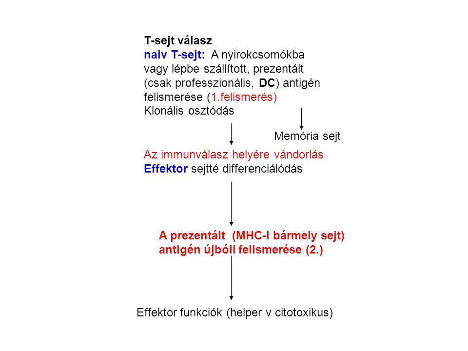 T-sejt válasz naiv T-sejt: A nyirokcsomókba vagy lépbe szállított, prezentált (csak professzionális, DC) antigén felismerése (1.felismerés)