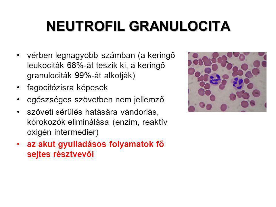 NEUTROFIL GRANULOCITA