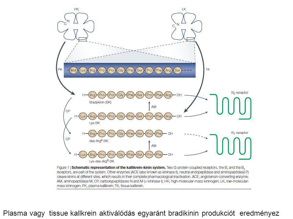 Plasma vagy tissue kallkrein aktiválódás egyaránt bradikinin produkciót eredményez