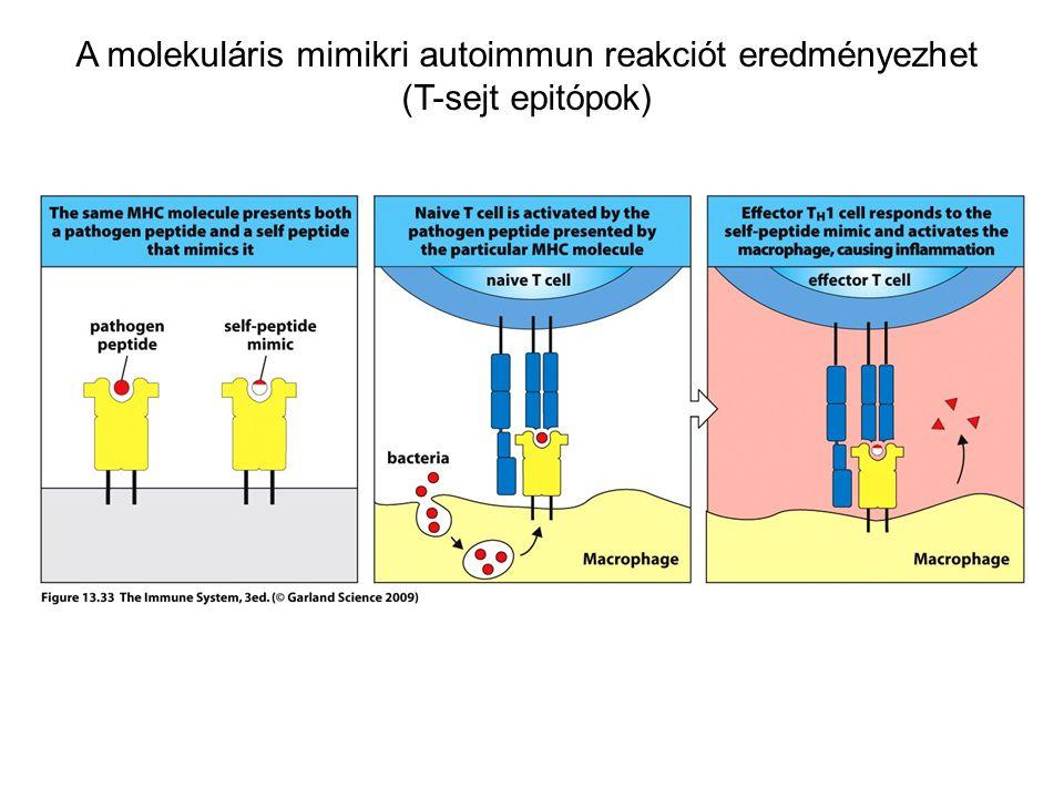 A molekuláris mimikri autoimmun reakciót eredményezhet