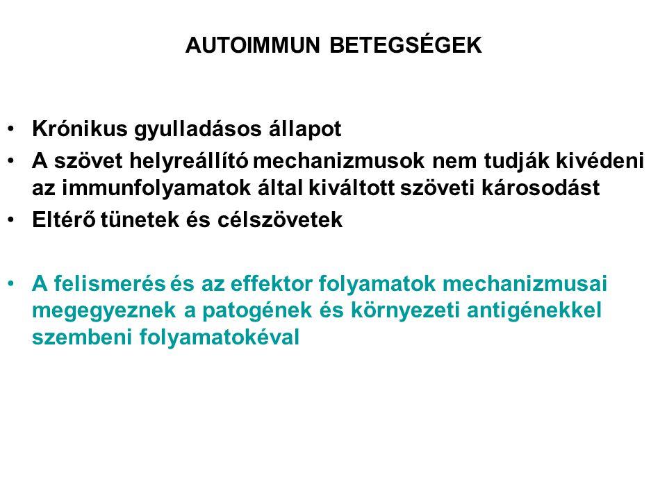 AUTOIMMUN BETEGSÉGEK Krónikus gyulladásos állapot.