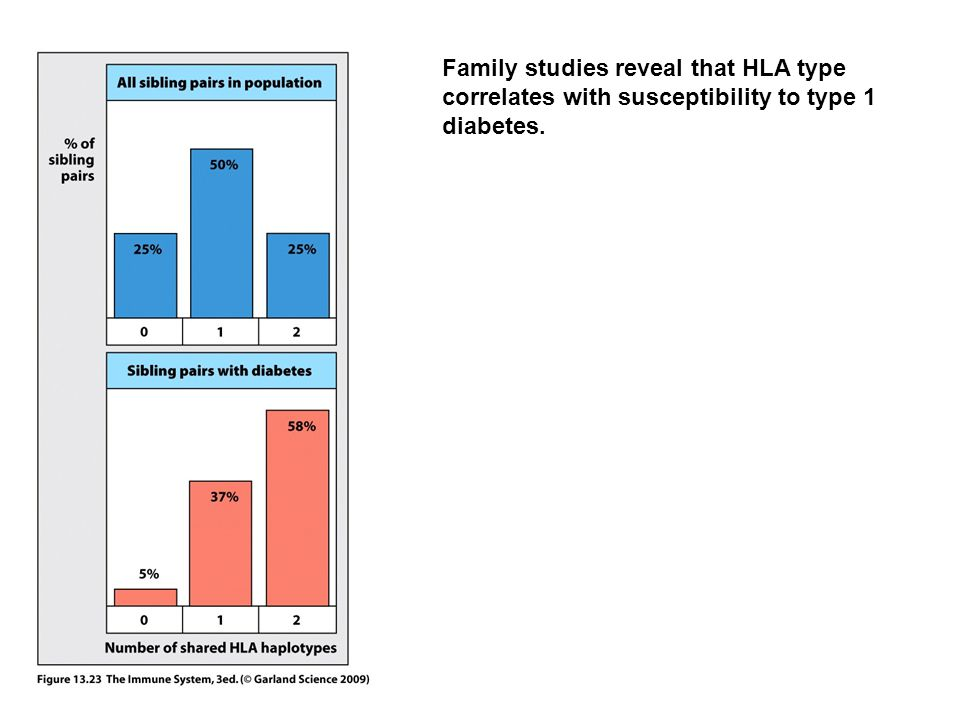 Family studies reveal that HLA type correlates with susceptibility to type 1 diabetes.