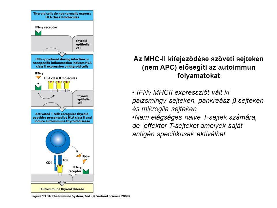 Az MHC-II kifejeződése szöveti sejteken