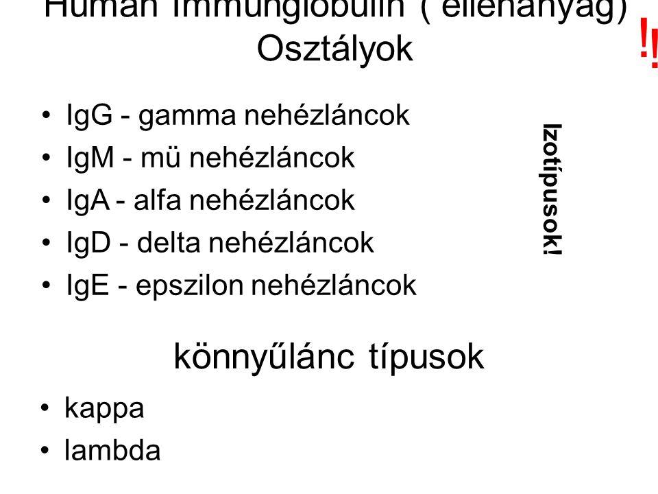 Humán Immunglobulin ( ellenanyag) Osztályok