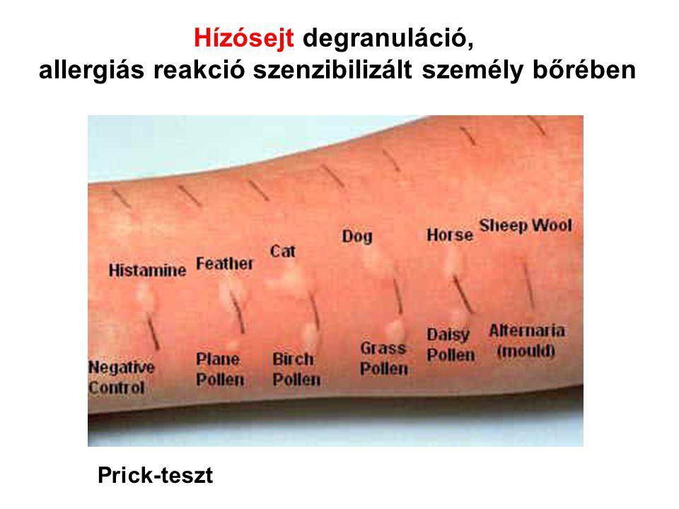 Hízósejt degranuláció,