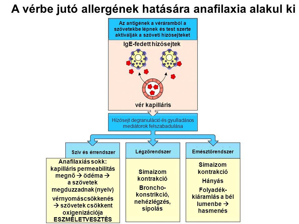 A vérbe jutó allergének hatására anafilaxia alakul ki