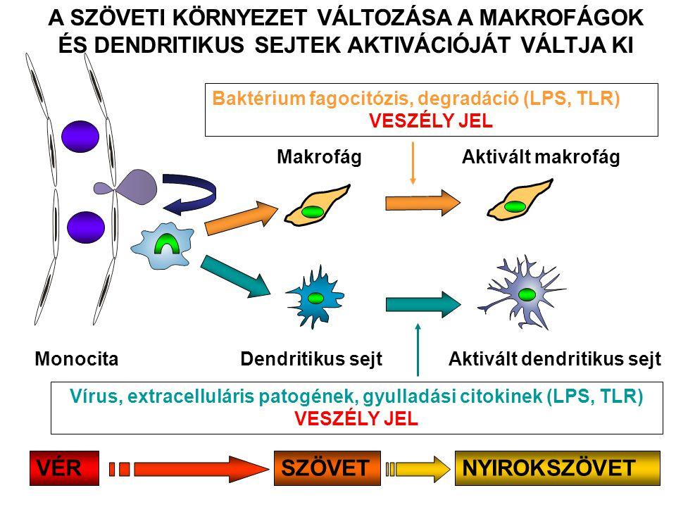 Vírus, extracelluláris patogének, gyulladási citokinek (LPS, TLR)