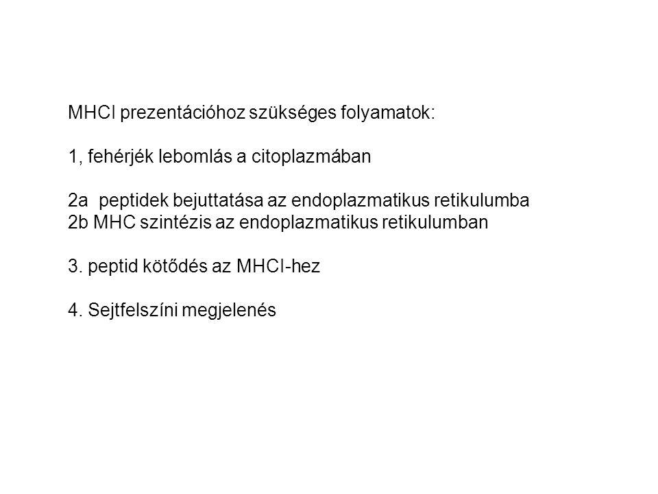 MHCI prezentációhoz szükséges folyamatok: