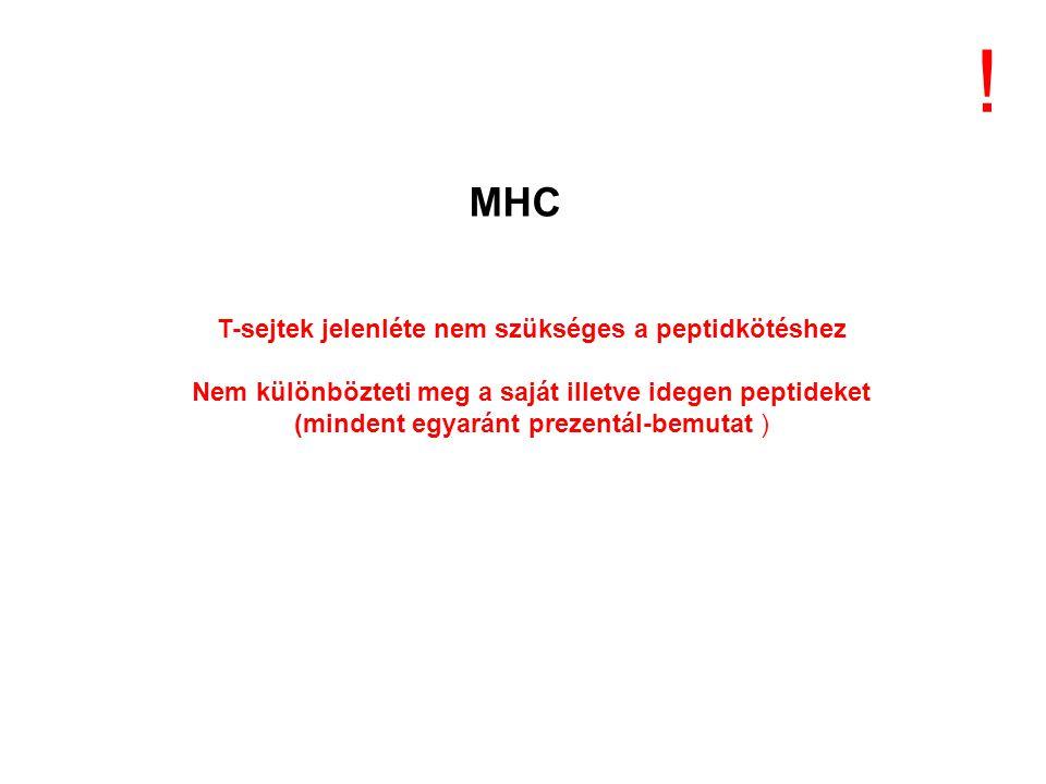 ! MHC T-sejtek jelenléte nem szükséges a peptidkötéshez