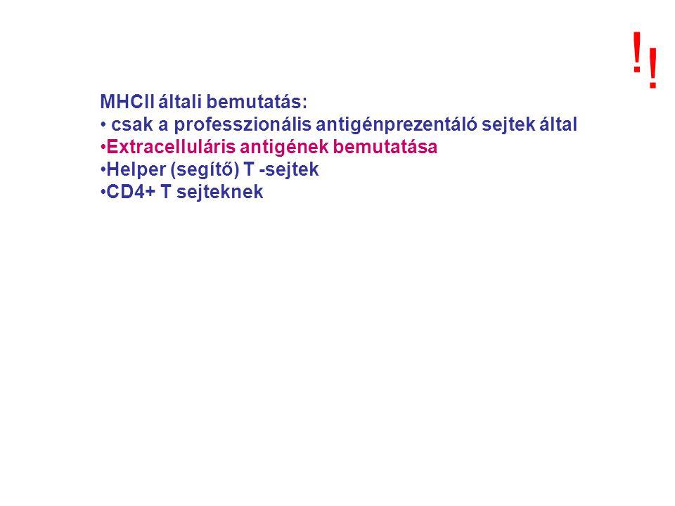 ! ! MHCII általi bemutatás: