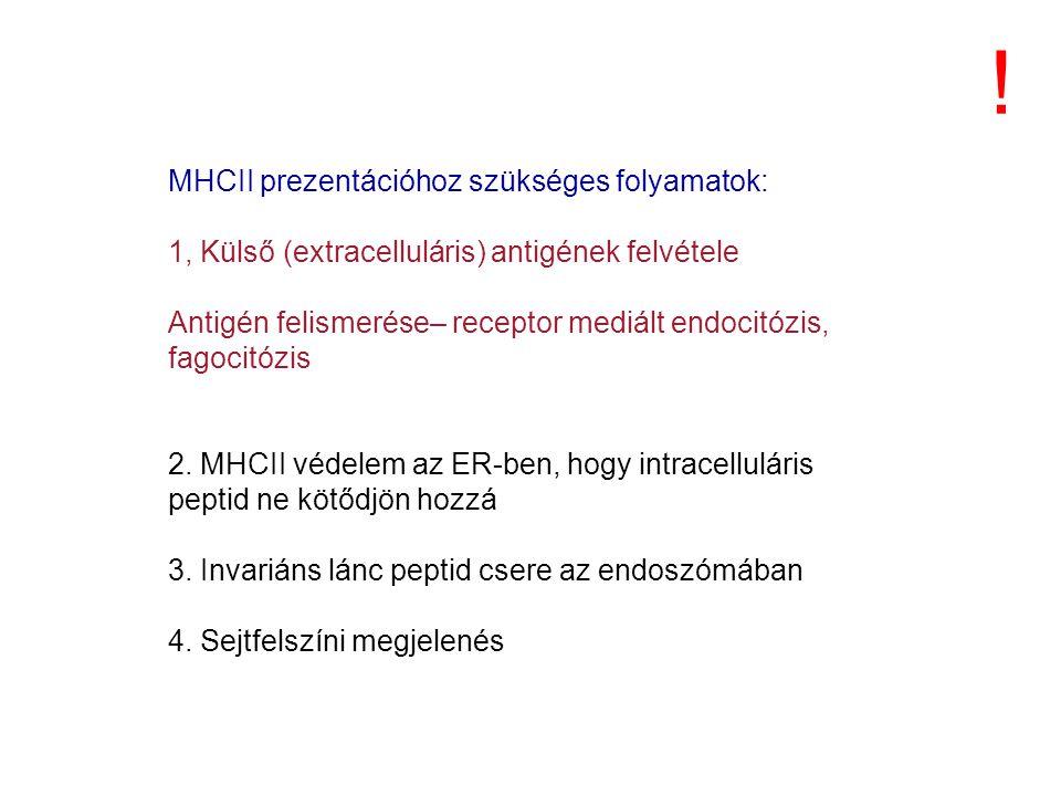 ! MHCII prezentációhoz szükséges folyamatok: