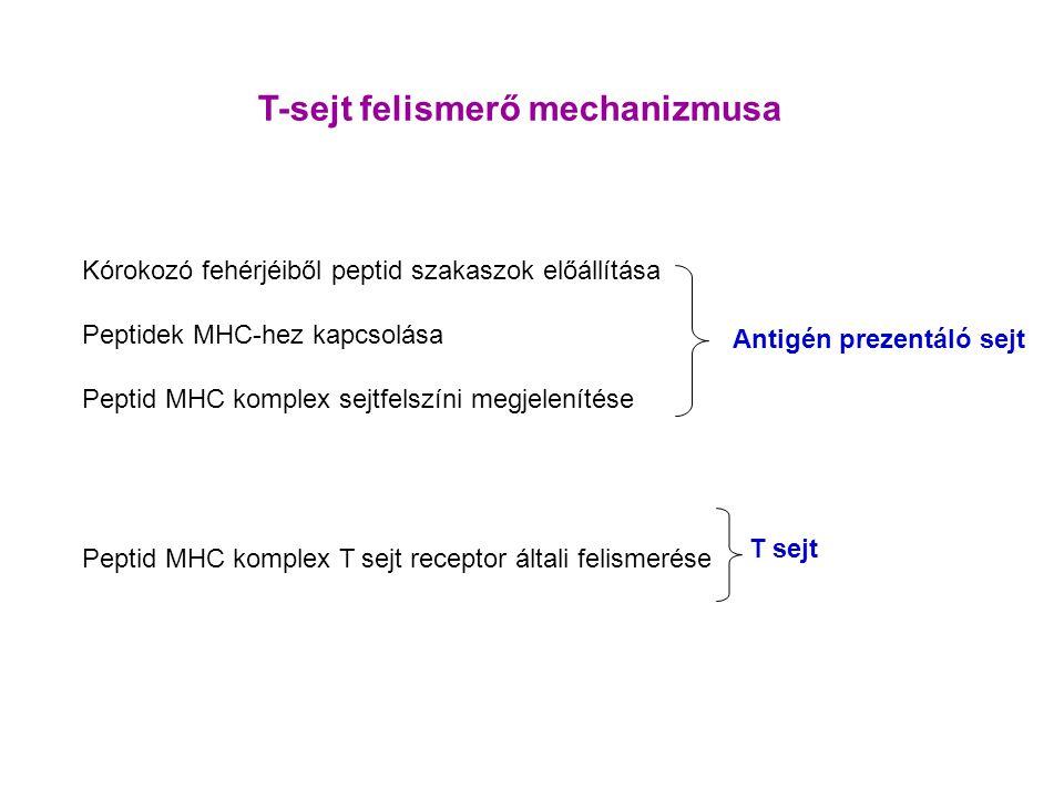 T-sejt felismerő mechanizmusa