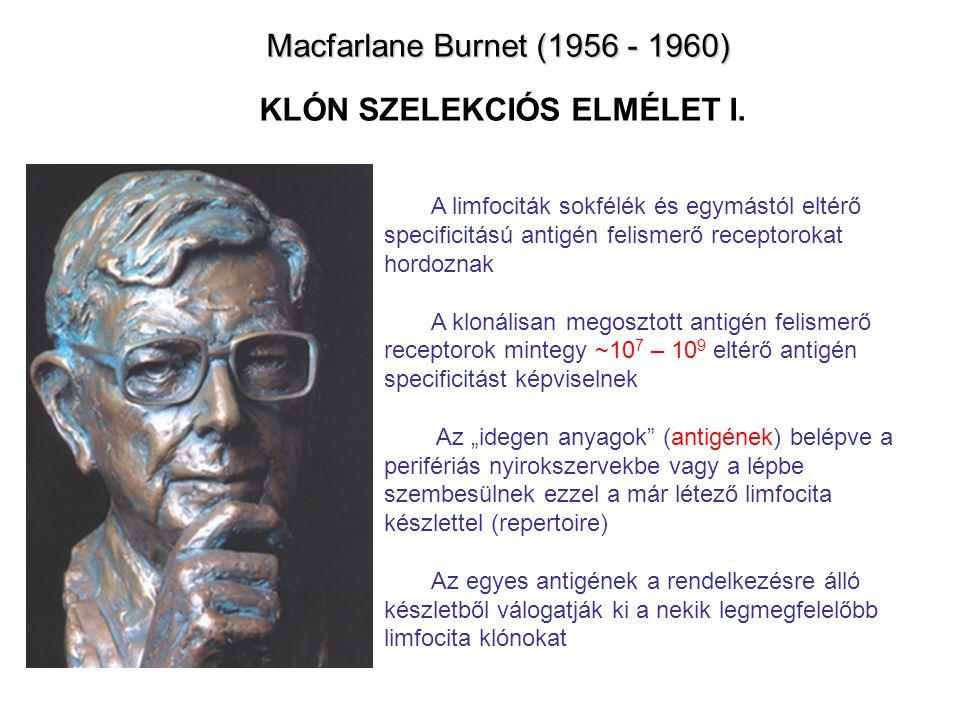 Macfarlane Burnet (1956 - 1960) KLÓN SZELEKCIÓS ELMÉLET I.