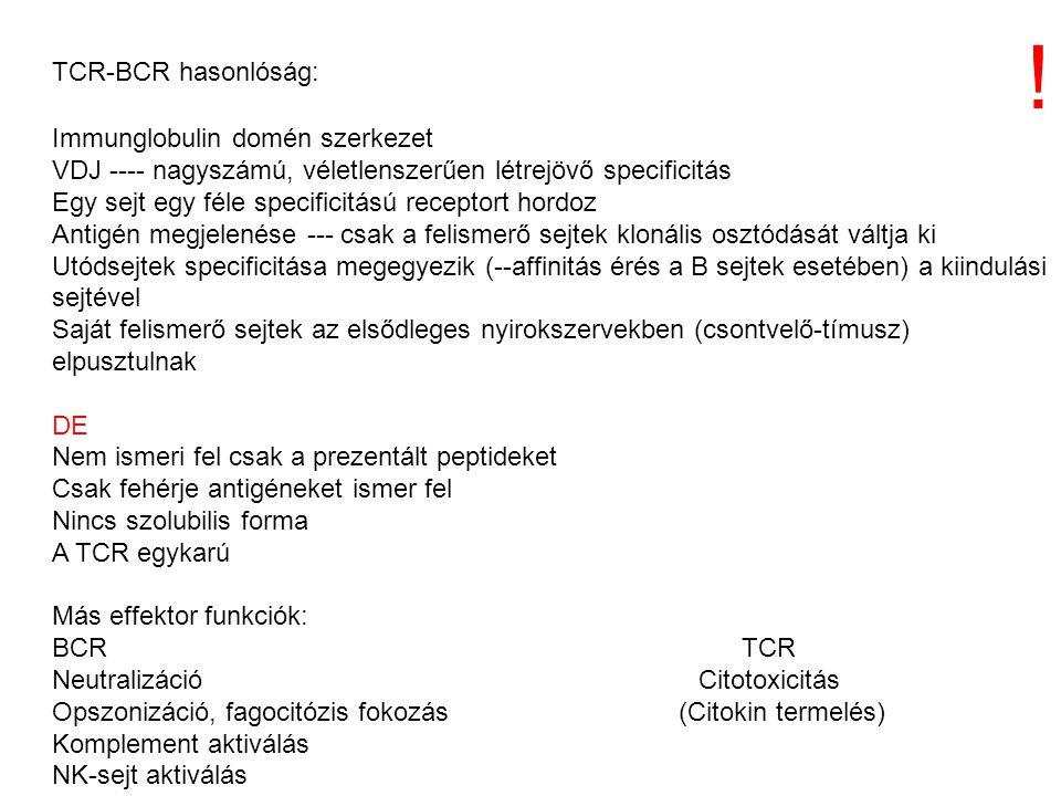 ! TCR-BCR hasonlóság: Immunglobulin domén szerkezet
